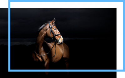Case Study: E-commerce Facebook Ads Campaign For Hi Form Equine UK